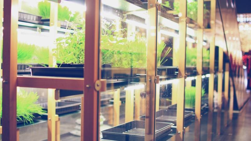 herbs_elevator_strå