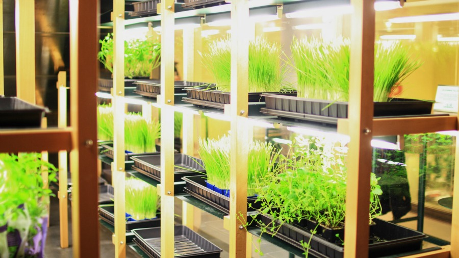 herbs_escalator