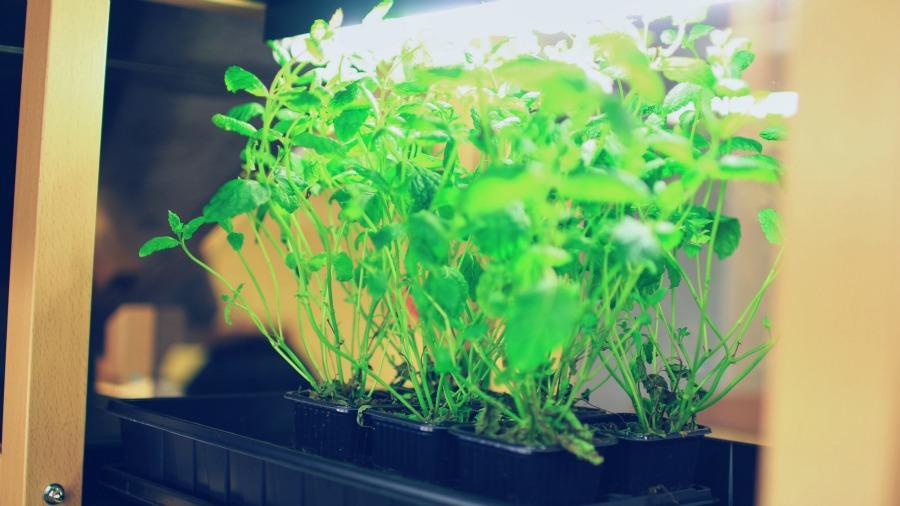 herbs_strå